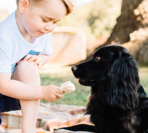 Prince George feeding his dog, Lupo, what appears to be ice cream