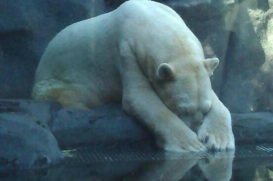 Arturo in March, 2105 posted by Free Arturo USA/Canada support/Facebook