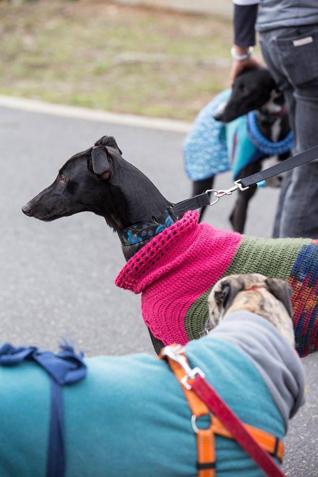 GreyhoundsRSPCAAct