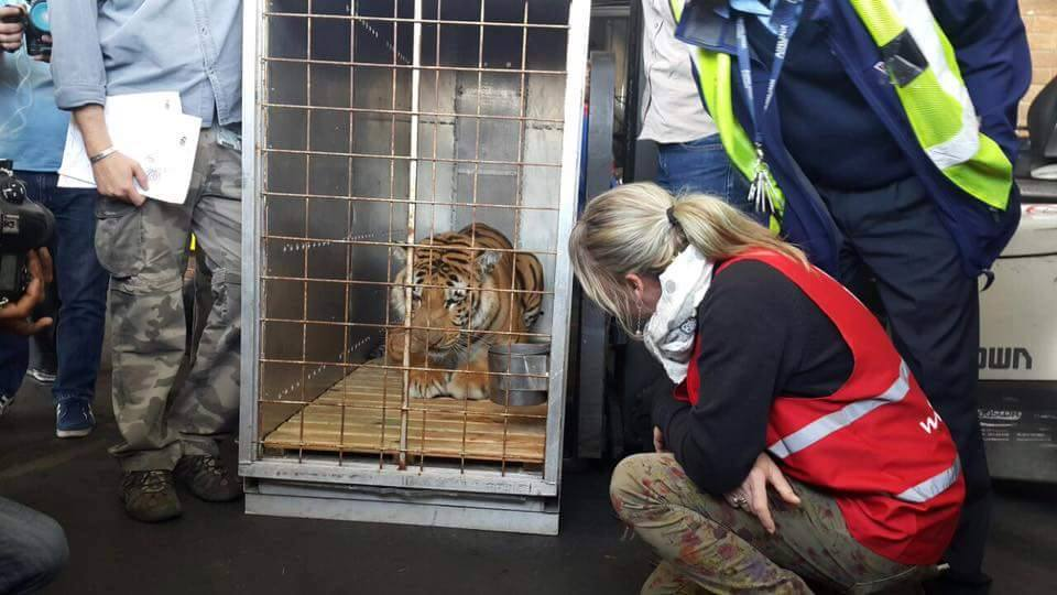 Laziz making the journey from Gaza. FOUR PAWS South Africa/Facebook