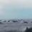 dolphinpodcookislands