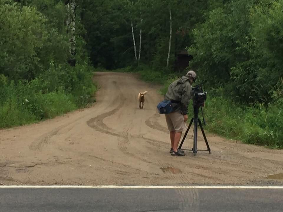 Bruno's journey being documents by KARE 11. Bruno of Longville, Minnesota/Facebook