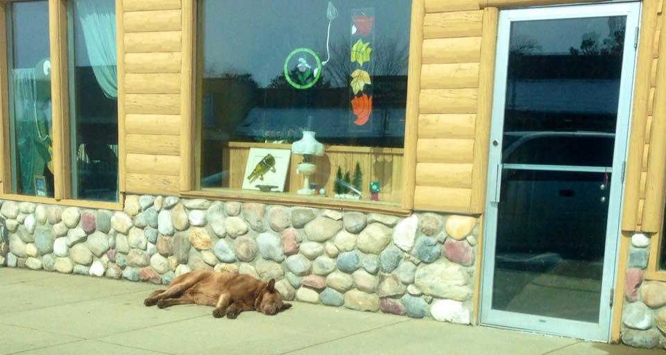 Bruno taking a nap. Scott Sleight/Bruno of Longville Minnesota/Facebook