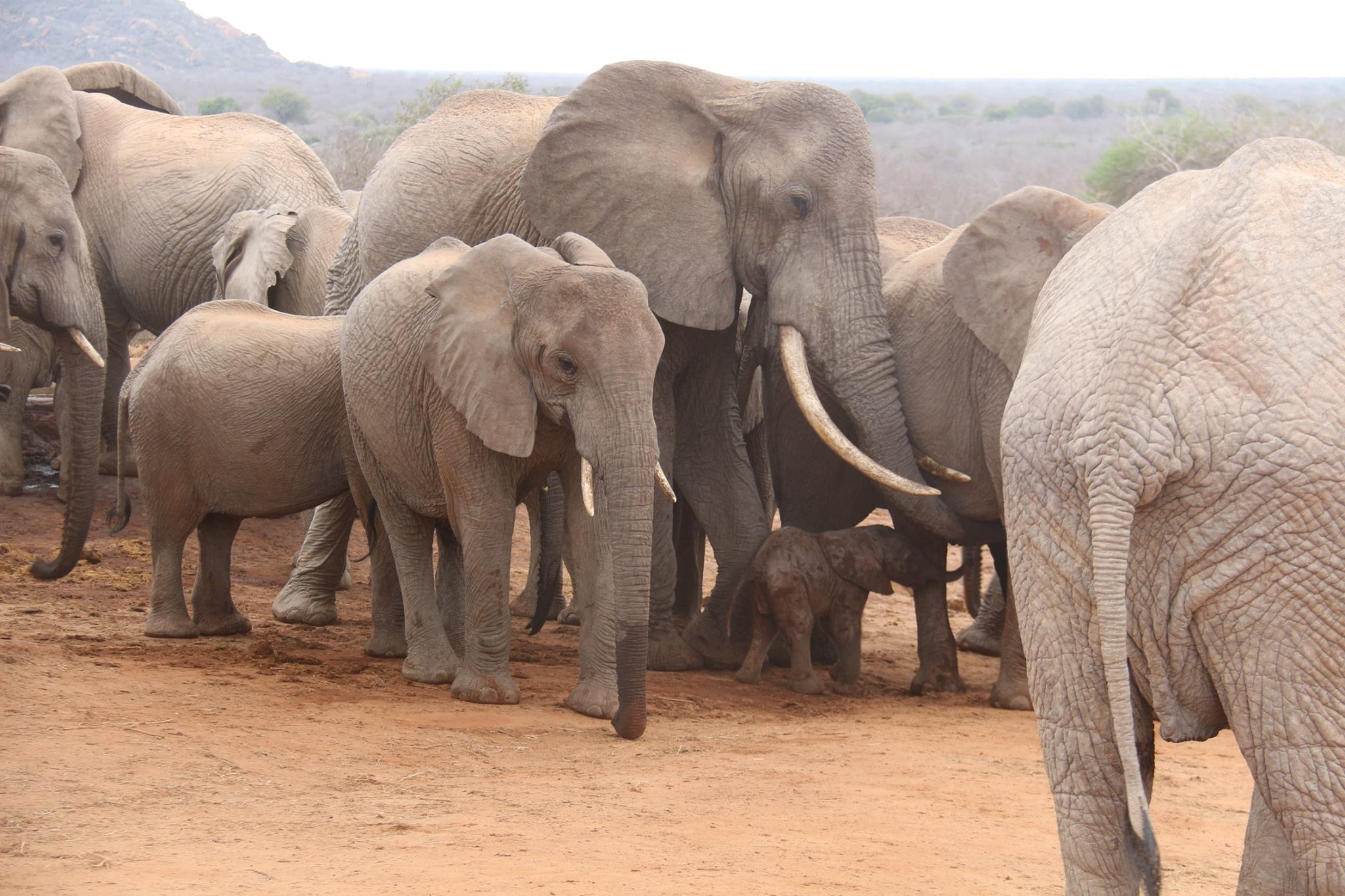 GawaElephantsSheldrickTrust