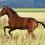 horse_running