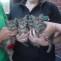 kittens-035-1
