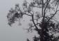 koalastormaustralia