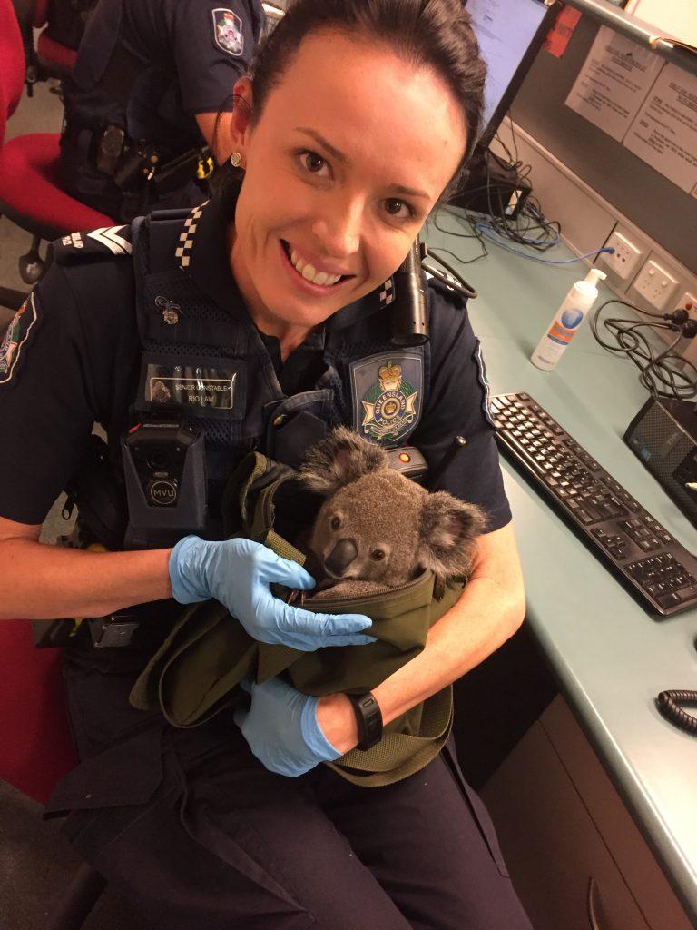 koala-image4