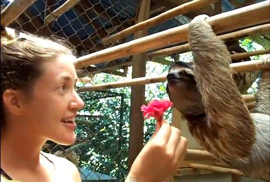 slothhugflower