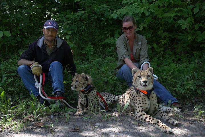 cheetahswesternstar