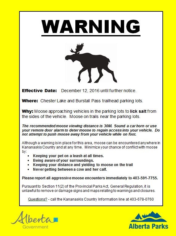 moose-warning-chester_burstall-dec-13-2016