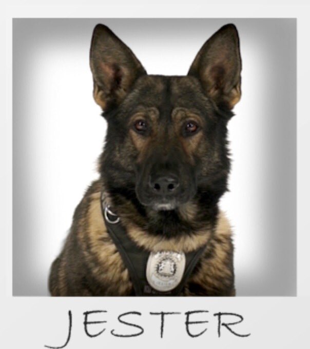Breaking Up Is Hard To Do Police Officer Charged With: Calgary Police K9 Officer Stabbed By Suspect During Arrest