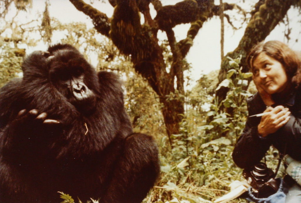 Portia de rossi names gorilla sanctuary in rwanda after for Garage rossi marseille