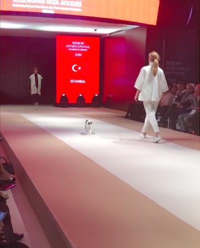 74f163942e Cat crashes runway at fashion show in Turkey - Critter FilesCritter ...