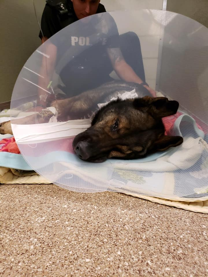 Florida cop and police dog shot in the line of duty
